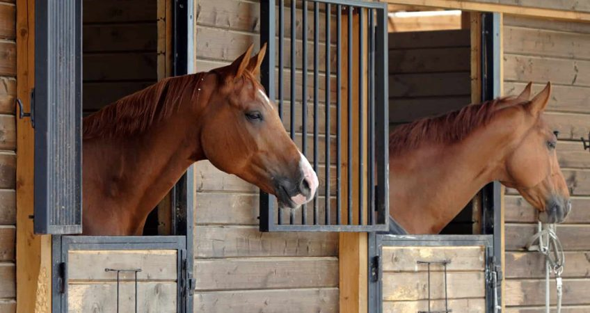 Horses and stables stalls solutions